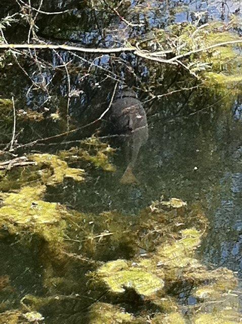 Piccola cava con tartarughe carpfishing pcf il forum for Lago per tartarughe